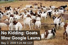 No Kidding: Goats Mow Google Lawns