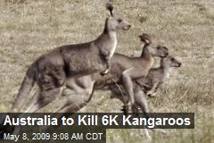 Australia to Kill 6K Kangaroos