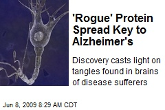 'Rogue' Protein Spread Key to Alzheimer's