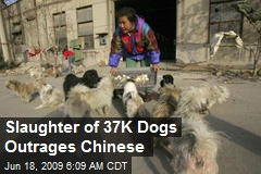Slaughter of 37K Dogs Outrages Chinese