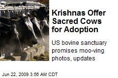Krishnas Offer Sacred Cows for Adoption