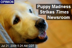 Puppy Madness Strikes Times Newsroom