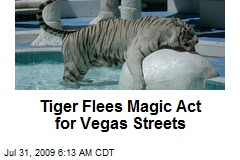 Tiger Flees Magic Act for Vegas Streets
