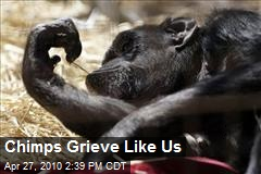 Chimps Grieve Like Us