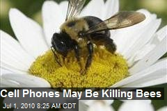 Cell Phones May Be Killing Bees
