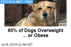 Fetch a Diet, Fido
